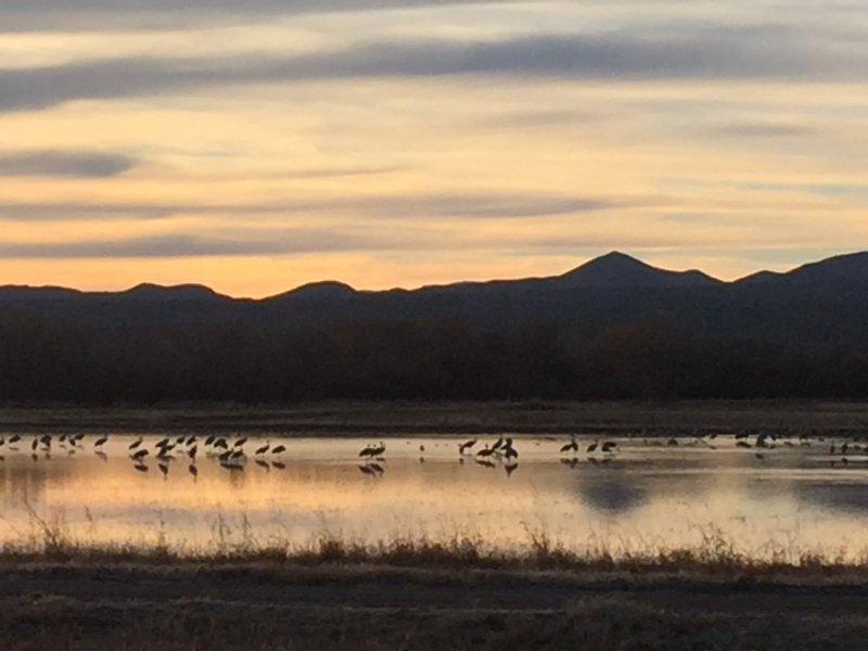 Assista migrações de aves no mundialmente famoso Bosque Del Apache Santuário, menos de uma hora de distância