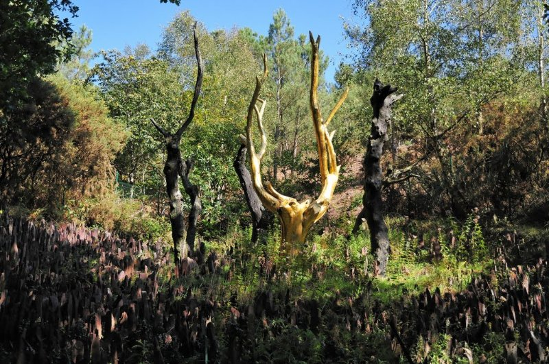 L'arbre d'Or at Forest of Broceliande