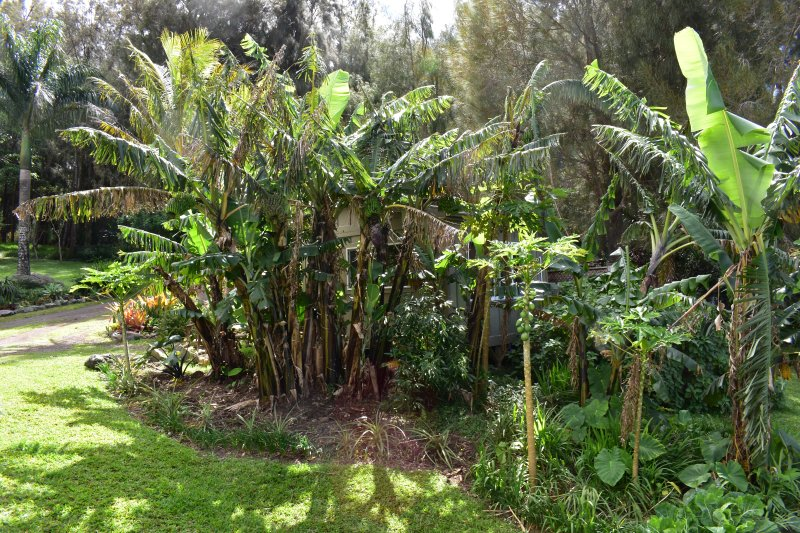 Banana sono in crescita proprio fuori della camera :)