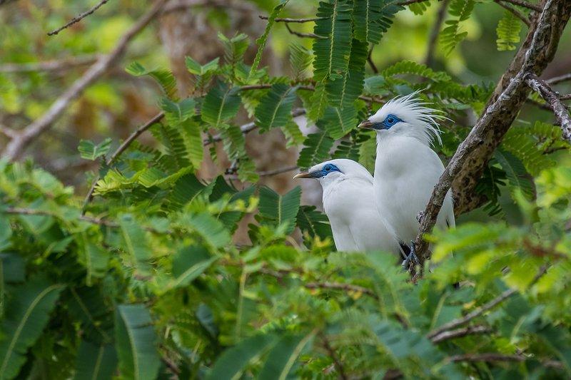 Vogels kijken in het Barat National Park.