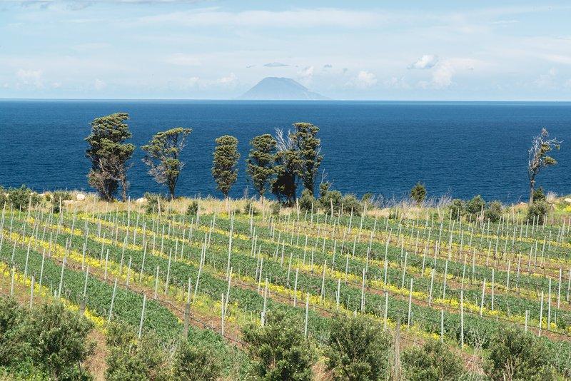 Tenuta Rasocolmo, Winery & Hospitality, vacation rental in Orto Liuzzo