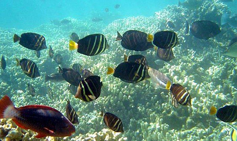 Le poisson avec la plongée en apnée