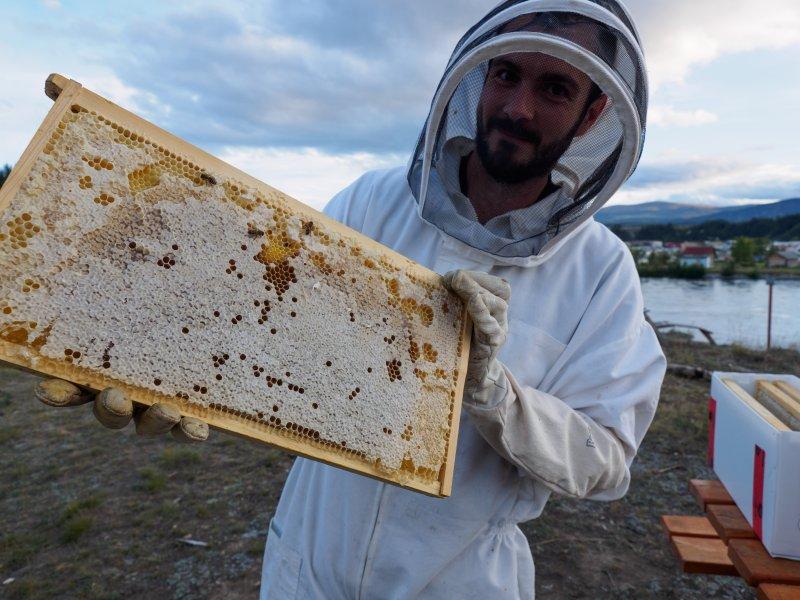 L'élevage d'abeilles du miel sur place