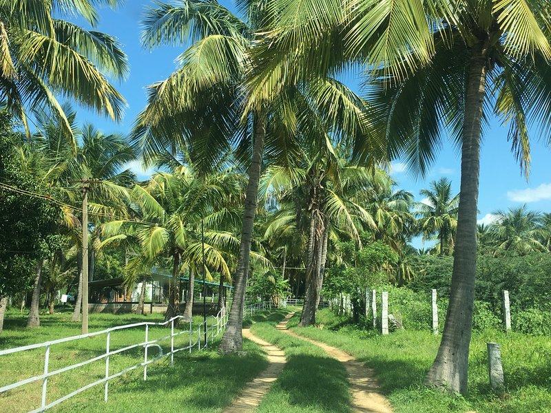 Nannilam Organic Farm stay, holiday rental in Vellore