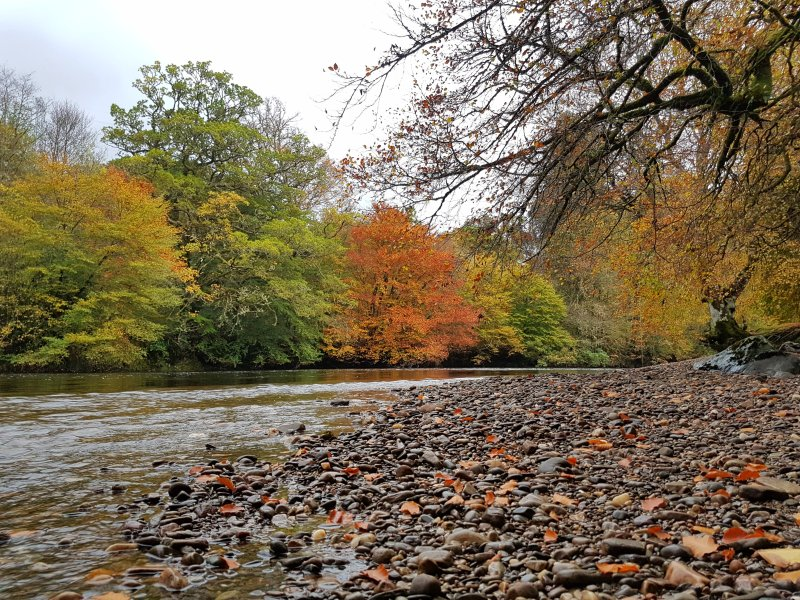Autumn colours on the River Orchy.