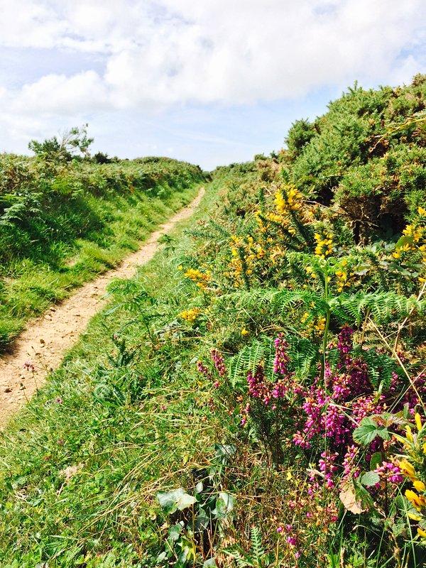 Coastal path at St.Ishmaels