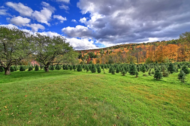 Overlooking a Christmas tree farm, the property provides scenic views.