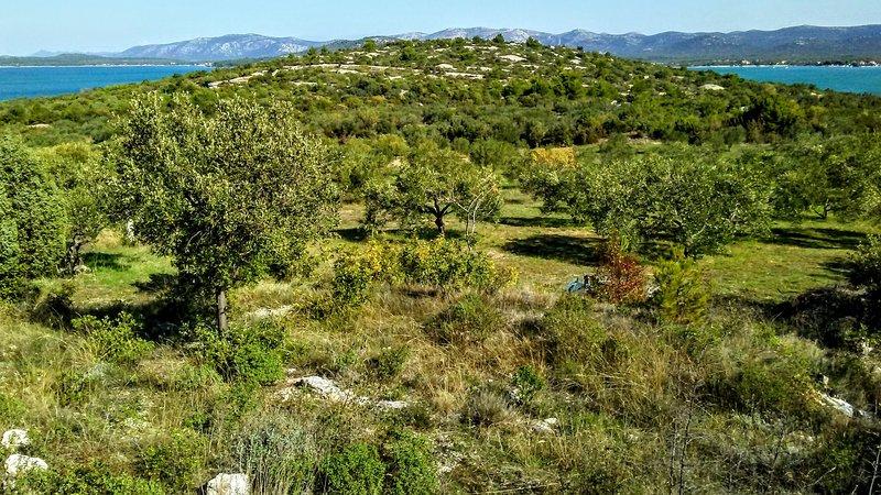 Faites une promenade dans la nature de notre maison à travers les vergers d'oliviers.