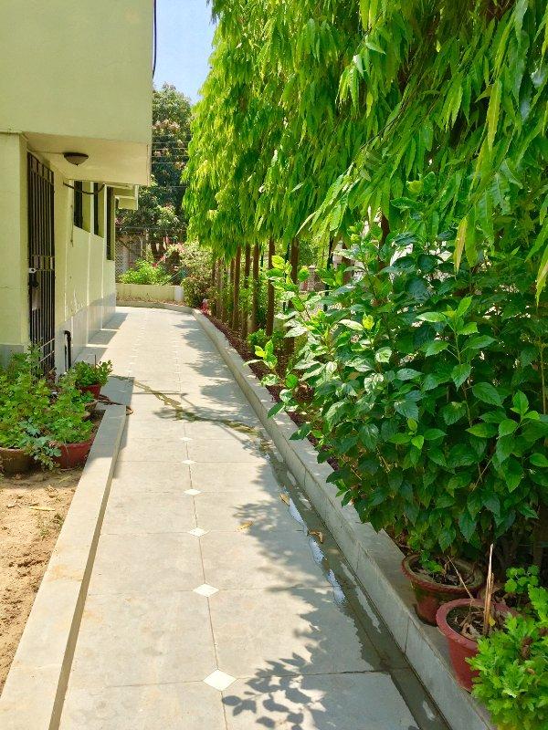 Vegetación que rodea la casa