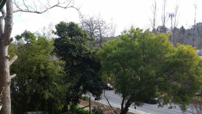 une vue depuis le balcon verdoyant