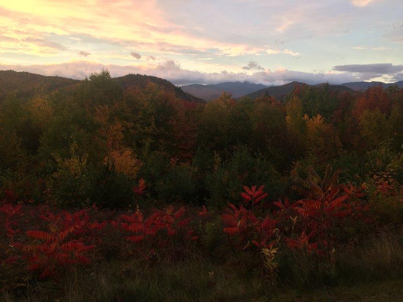 vista Foliage