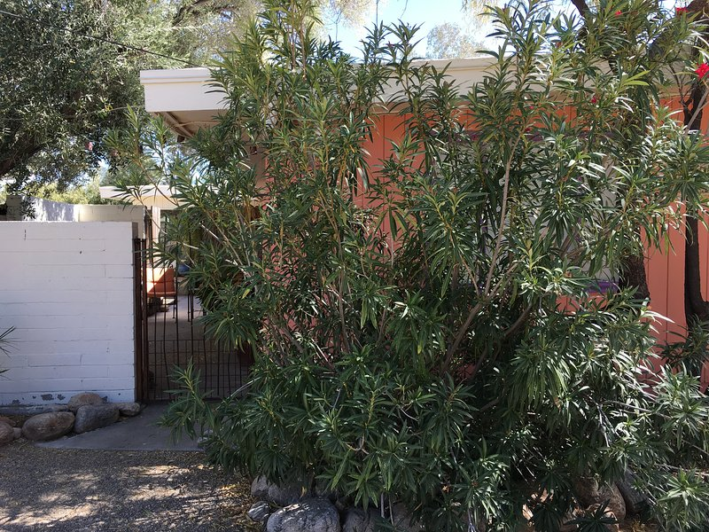 Private Studio-Charming Desert Setting W/Mountain, holiday rental in Tucson