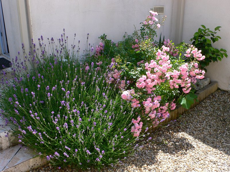 The lavender and rose garden.