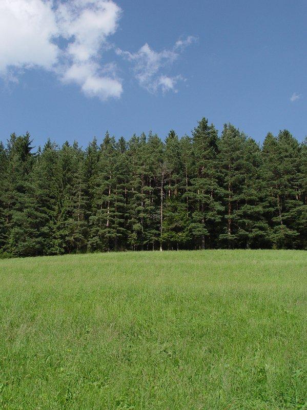 Negro Bosque - naturaleza pura