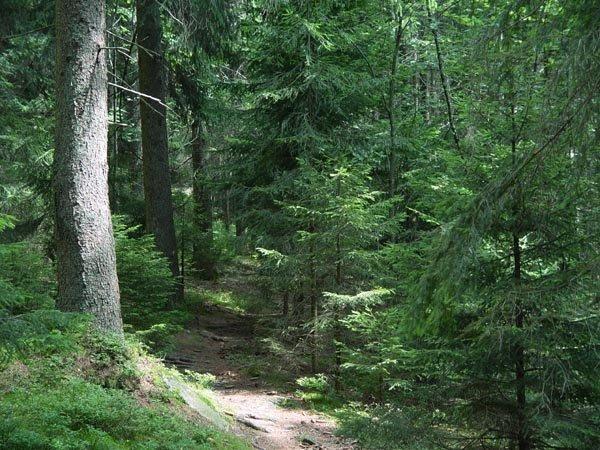 El bosque se inicia directamente detrás de la casa.