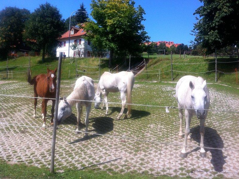 Cerca de la granja de caballos - bestaenderhof