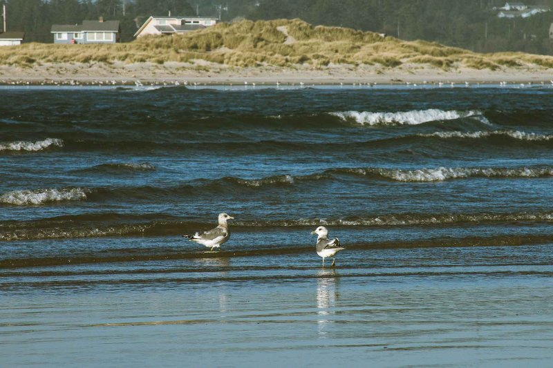 Beautiful Waldport Bay is a fascinating seaside location in any season