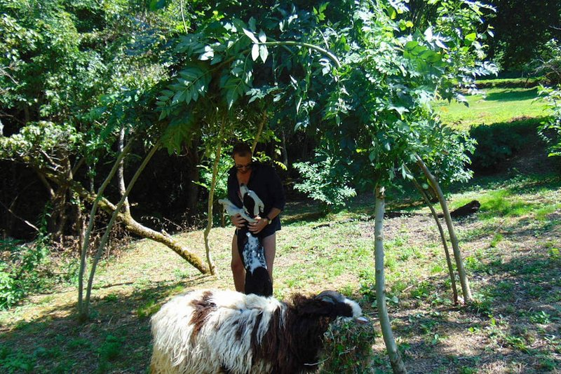 Playing with the animals in the orchard.