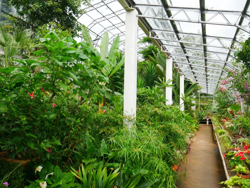 The Palm House in  Torre Abbey - one of scores of visitor attractions in and around Torquay.