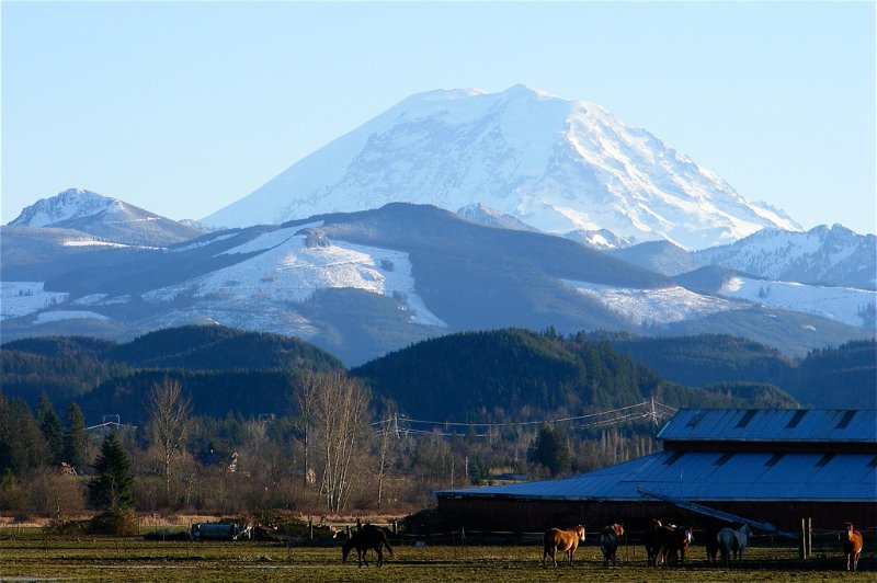 Enumclaw Wa dairy with Mt Rainier in the background.