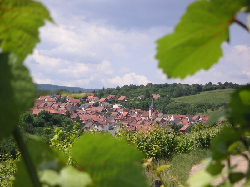 View of the village of F 67560 Rosenwiller where the cottage is located