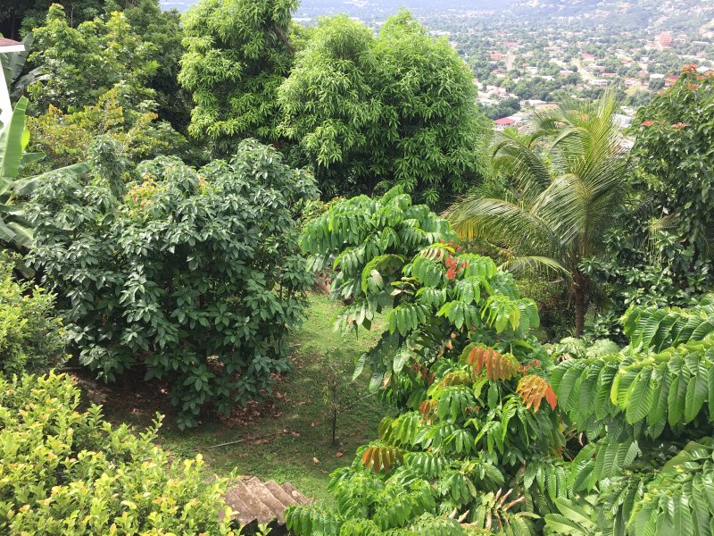 A view of the lush fruit trees: Avocado, Mango, Chinese Longan, Coconut and more...