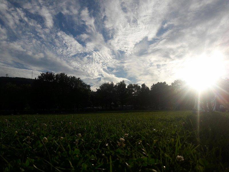 Within walking distance: Jeanne Mance Park (5 mins)