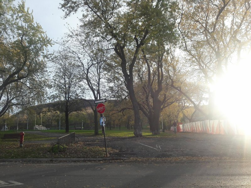 Within walking distance: Jeanne Mance Park and Mt Royal (5 mins)