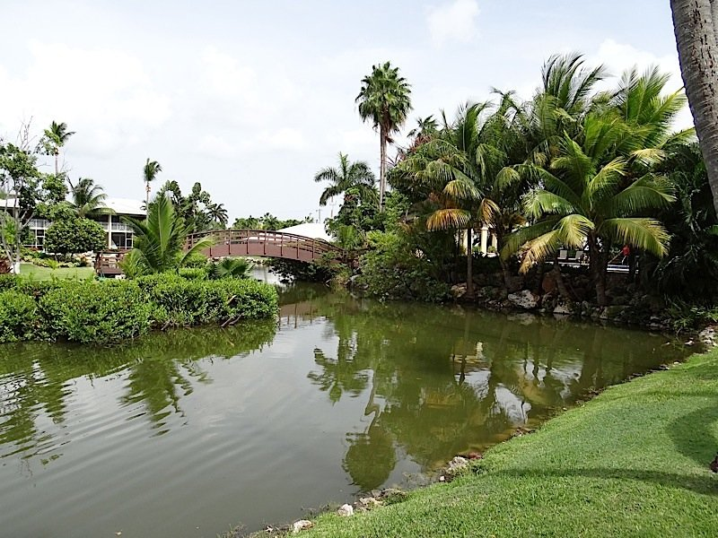 Lush garden oasis with fresh-water lagoon with turtles as you walk the pathway to enter the condo