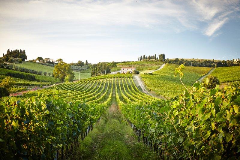 Casa en los viñedos