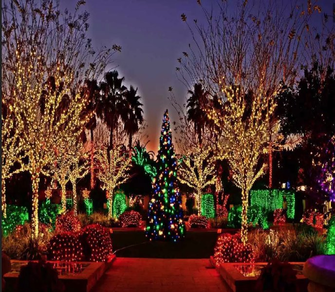 Palm Spring Holiday Lights