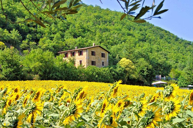 Farmhouse Apartments with Pool in Quiet Rural Setting - Pietramelina, location de vacances à Pierantonio