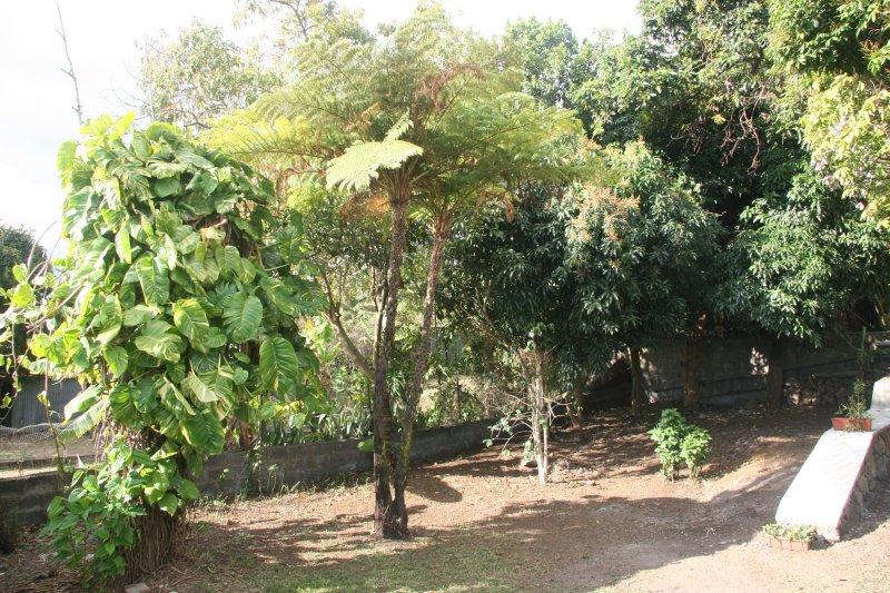 tropisk vegetation med mango, avokado, banan, guava ... en tabell