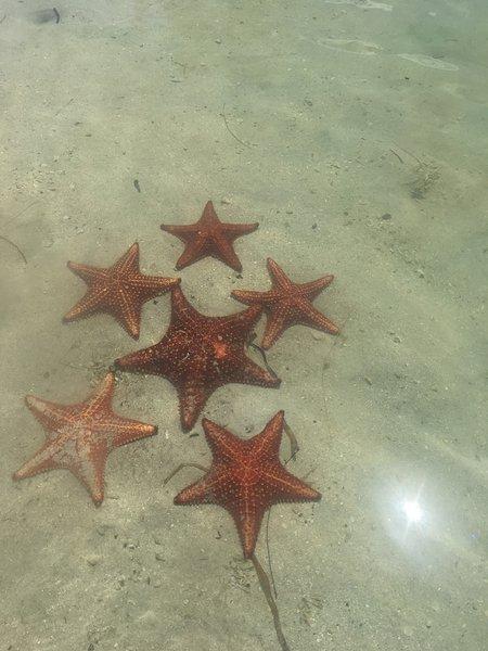 punto di stelle marine