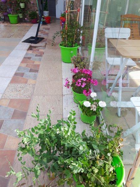 jardin en la azotea