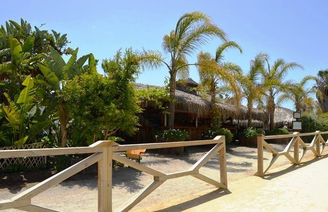 Restaurante local PEDROS BEACH