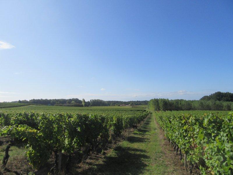 Vignes, des vignes et des vignes. La Bastide au loin, ma promenade quotidienne