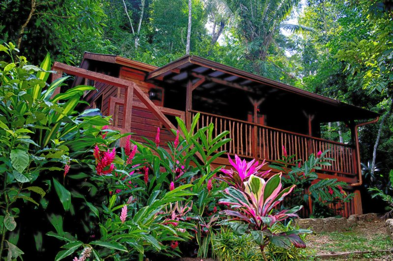 Treetops Guest House - Belize Rainforest destination ! $ 99  - $ 124. per night, holiday rental in Cayo