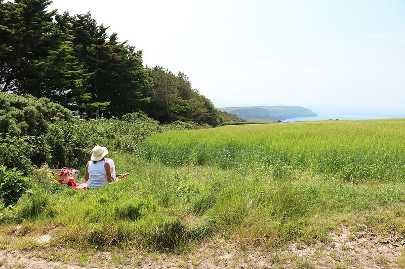 Woolacombe Beach Picnic In The Field