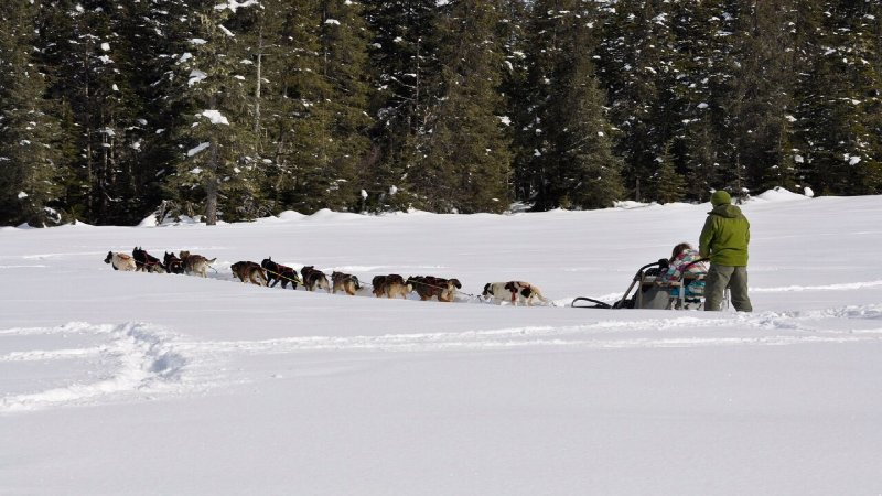 Moose Meadows -  Dog Sledding