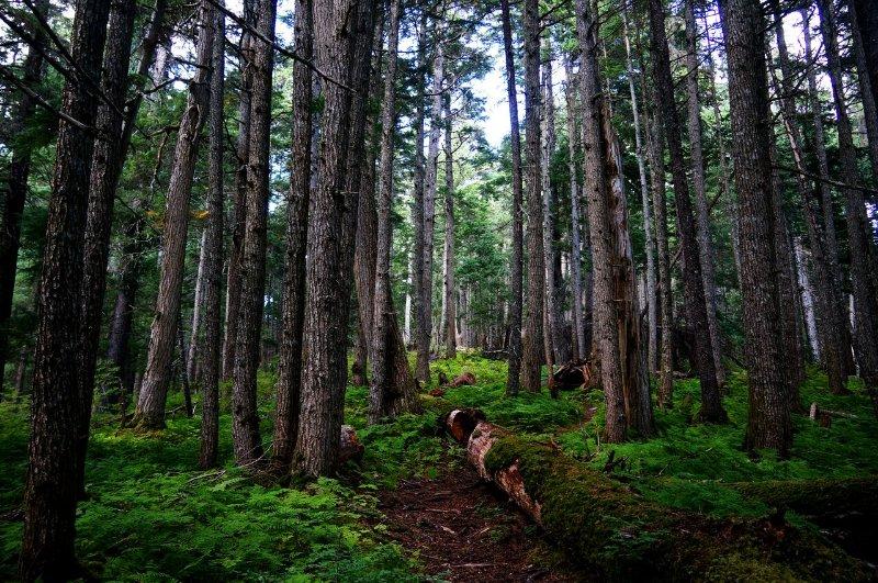 Hiking - Winner Creek Trail