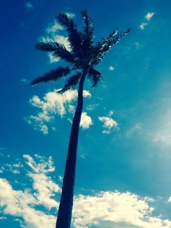 Welcome to Maui!