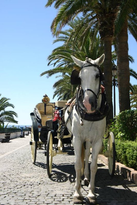 Carriage rides on offer in Marbella town