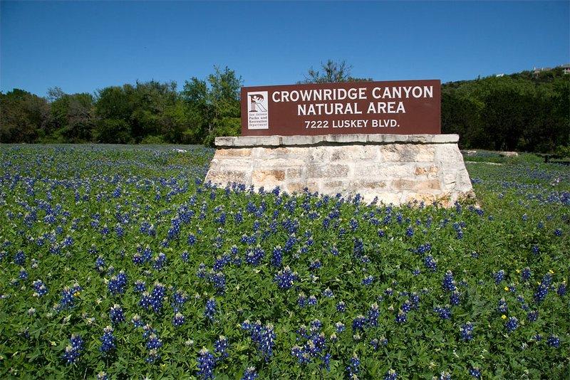 Capos azules cobran vida en la primavera y al lado del parque Crownridge