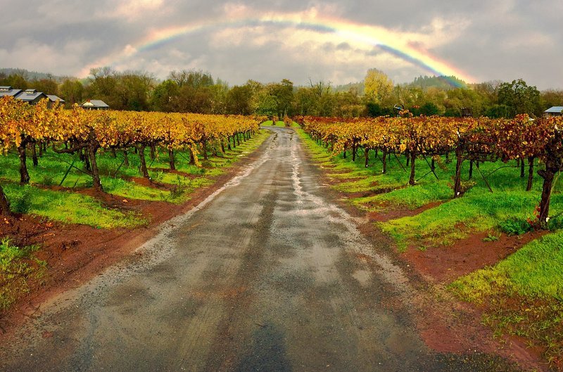 Magical moments you'll come across in Sonoma County as you explore vineyards and wineries.