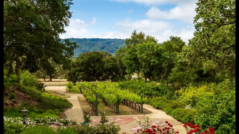 Cab Franc Vineyard with walking paths around 4 acre property.