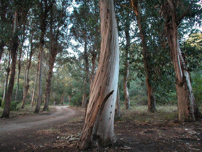Woods, meadows, ...