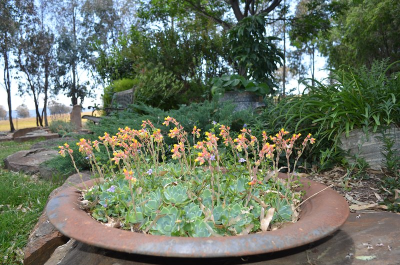 Beautiful established gardens