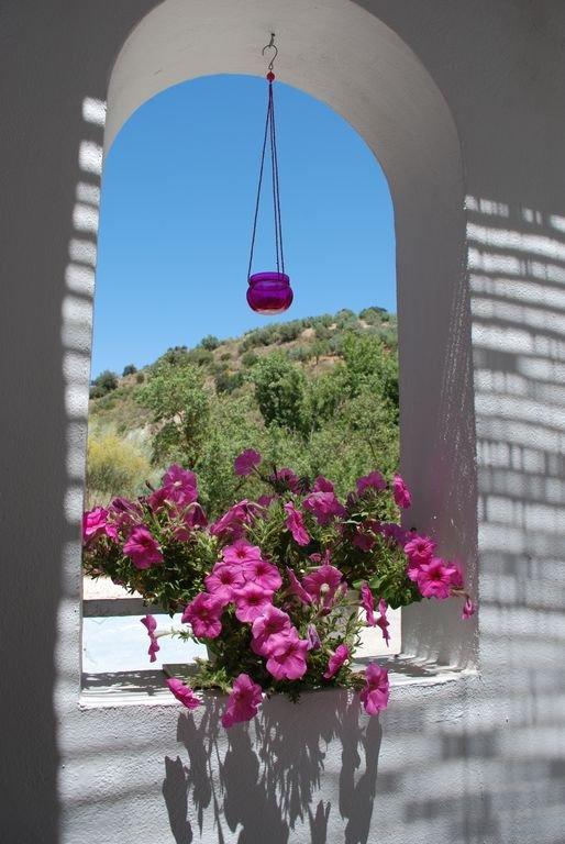 Utsikten från Casa Rosa terrass av den vackra olivlundar