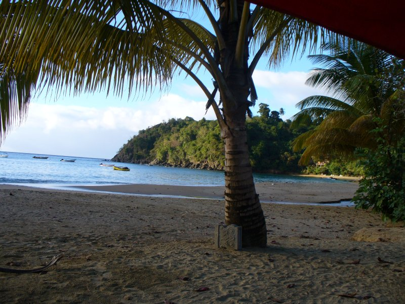 And don't forget to relax and enjoy a drink or two under a coconut tree on the beach